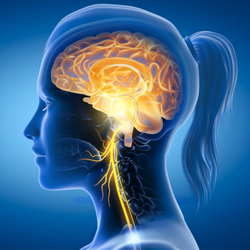 vagus nerve | Why The Vagus Nerve Is So Important For Weight Loss - 3 Easy Ways to Start